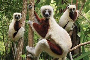 LEMUR ISLAND TRAVEL MADAGASCAR